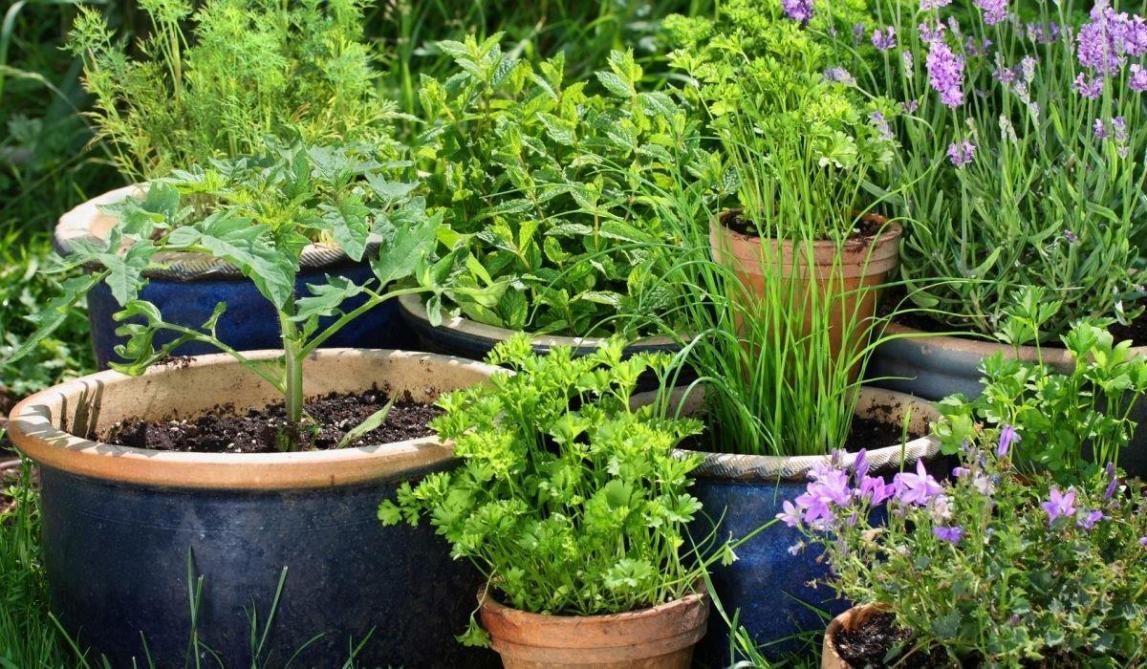 Kruiden In Pot.Zomers Tuinieren Kruiden In Potten Landbouwleven