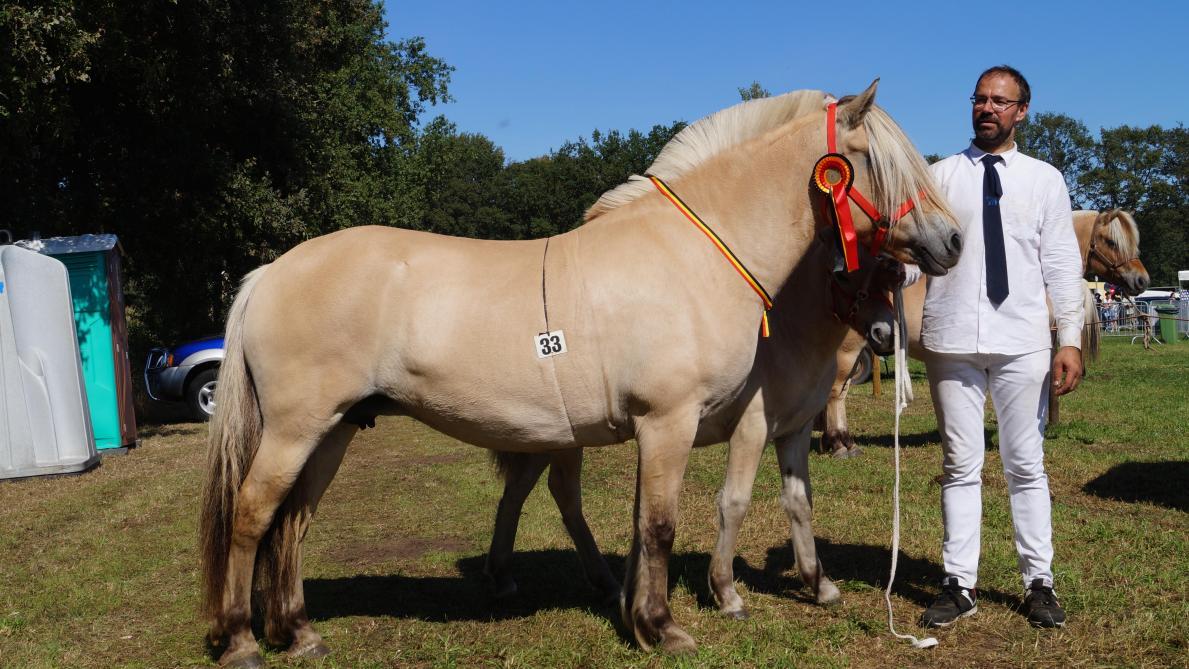 Stal van de Bosdries wint veulen- en dagkampioenschap - Landbouwleven